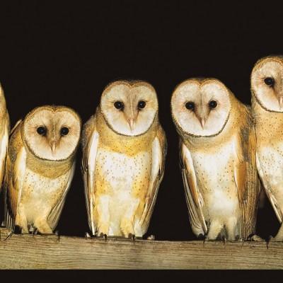 CJ Hockett - Five Owls