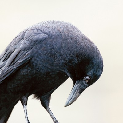 CJ Hockett - Crow Feet