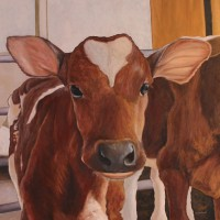Portrait of Ayrshire Cow