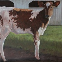 Portrait of Ayrshire Cow in Yard