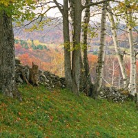 Richard Cofrancesco- Landscape-#15