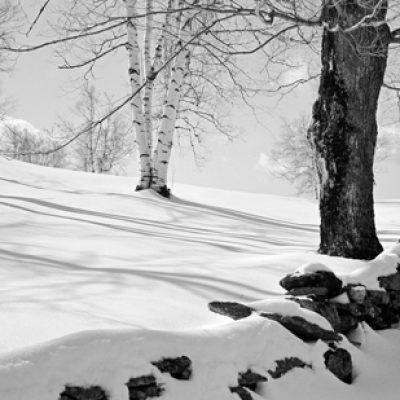 Snow, Rock Wall, Birches