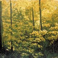 William Hays - Abundant-Earth