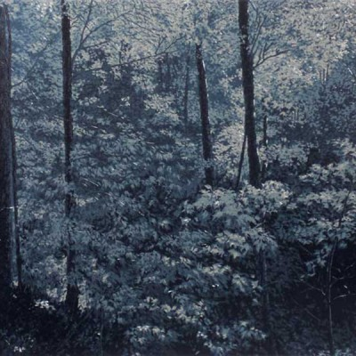 Forest in Moonlight