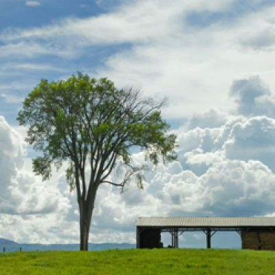 Addison Landscape 3