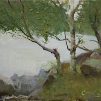 Birch Study