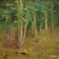 John's Brook Woodline