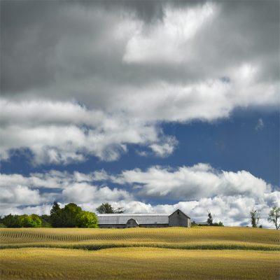 New Haven Farmscape I