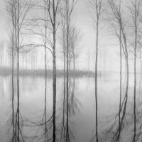 High Water Trees #1