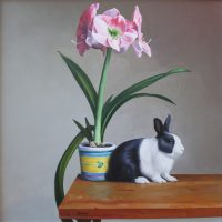 The Dutch Bunny and The Amaryllis