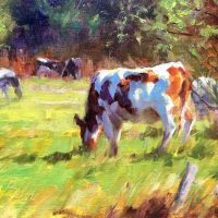 Late Summer Cows