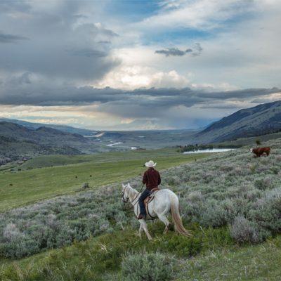 Paradise Valley Cowboy