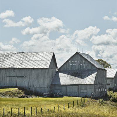 Bingham Farm I