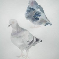 Rock Dove, A Reflection I