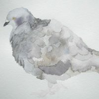 Rock Dove A Reflection IV