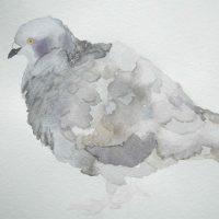 Rock Dove A Reflection IV