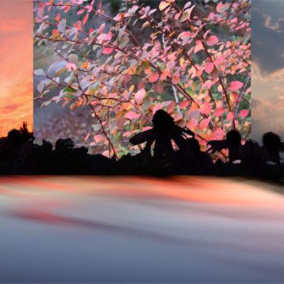 Sky / Meadow