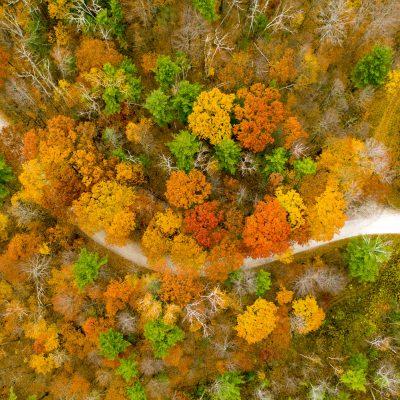 Caleb Kenna - Fall Foliage in Sudbury, Vermont
