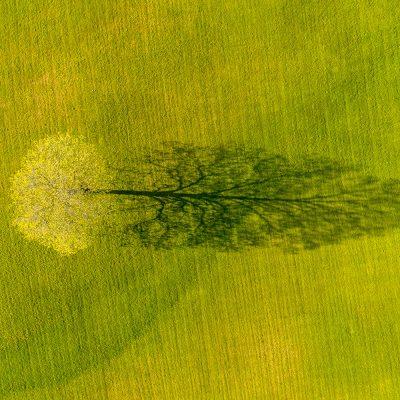Caleb Kenna - Spring Maple Tree Shadow, Weybridge