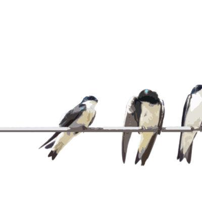 Boughton Walden - Birds on a Wire