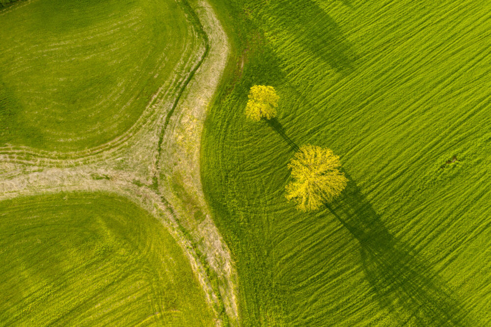 Caleb Kenna - Two Trees in Spring Weybridge, Vermont