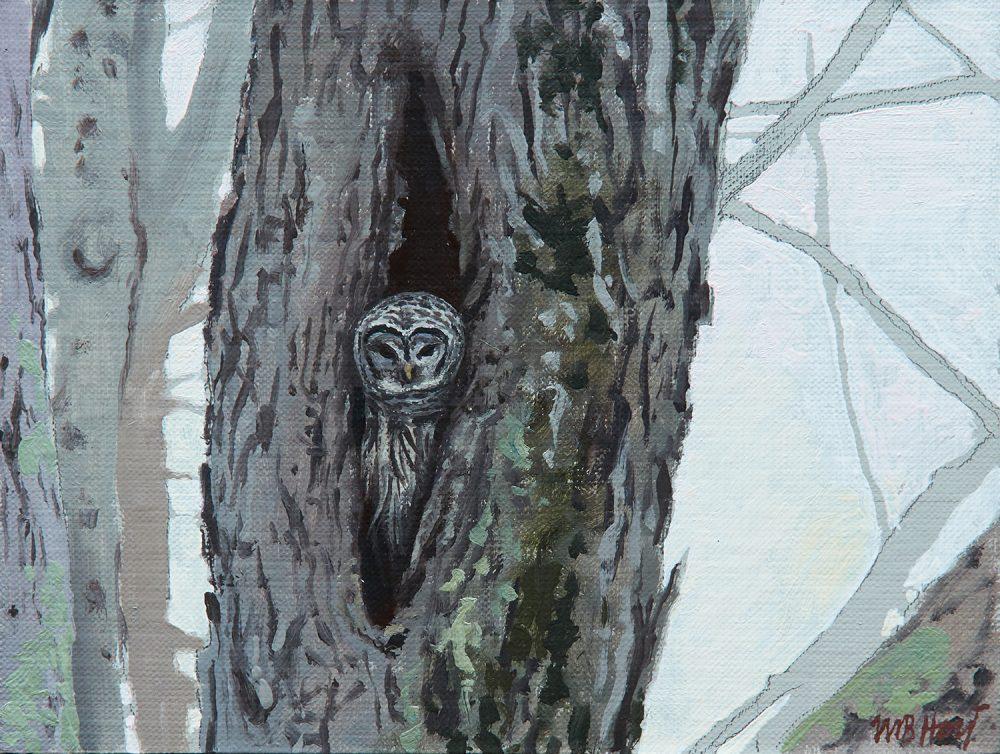 William Hoyt - Owl