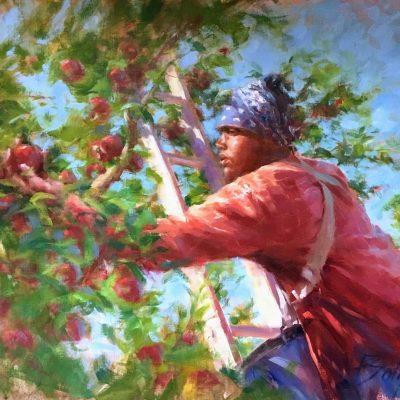 Joe Bolger - Jamaican Apple Picker