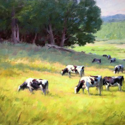 Joe Bolger - Summer Cows